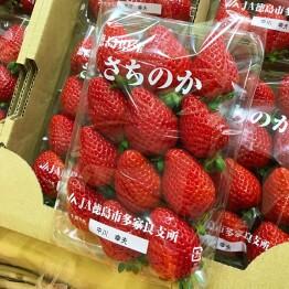 徳島県産さちのかです。
