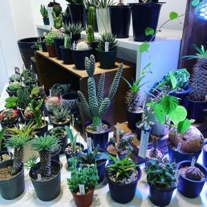 植物week!